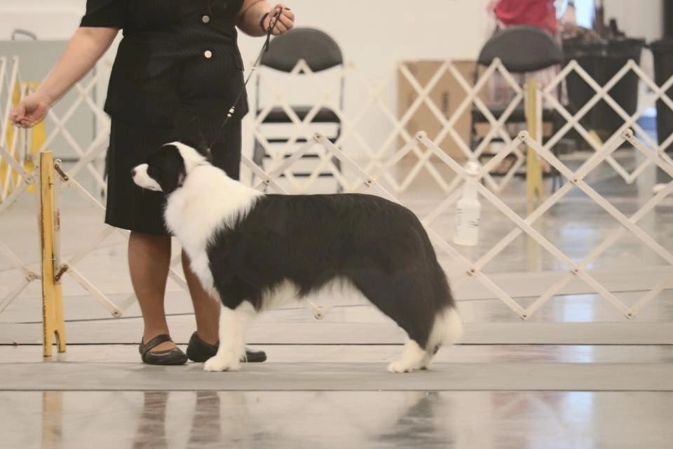 River Valley Cluster | Owensboro River City Kennel Club