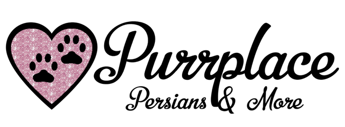 Purrplace Persians & More