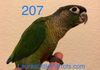 Sold Green cheek: Normal Male $250