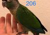Green cheek: Normal male $250 Reserved for Olga