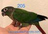 Green cheek: Normal male $250 Reserved for Christopher
