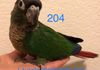 Available! Green cheek Normal female $250