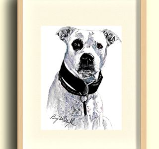 dog drawing pet portrait