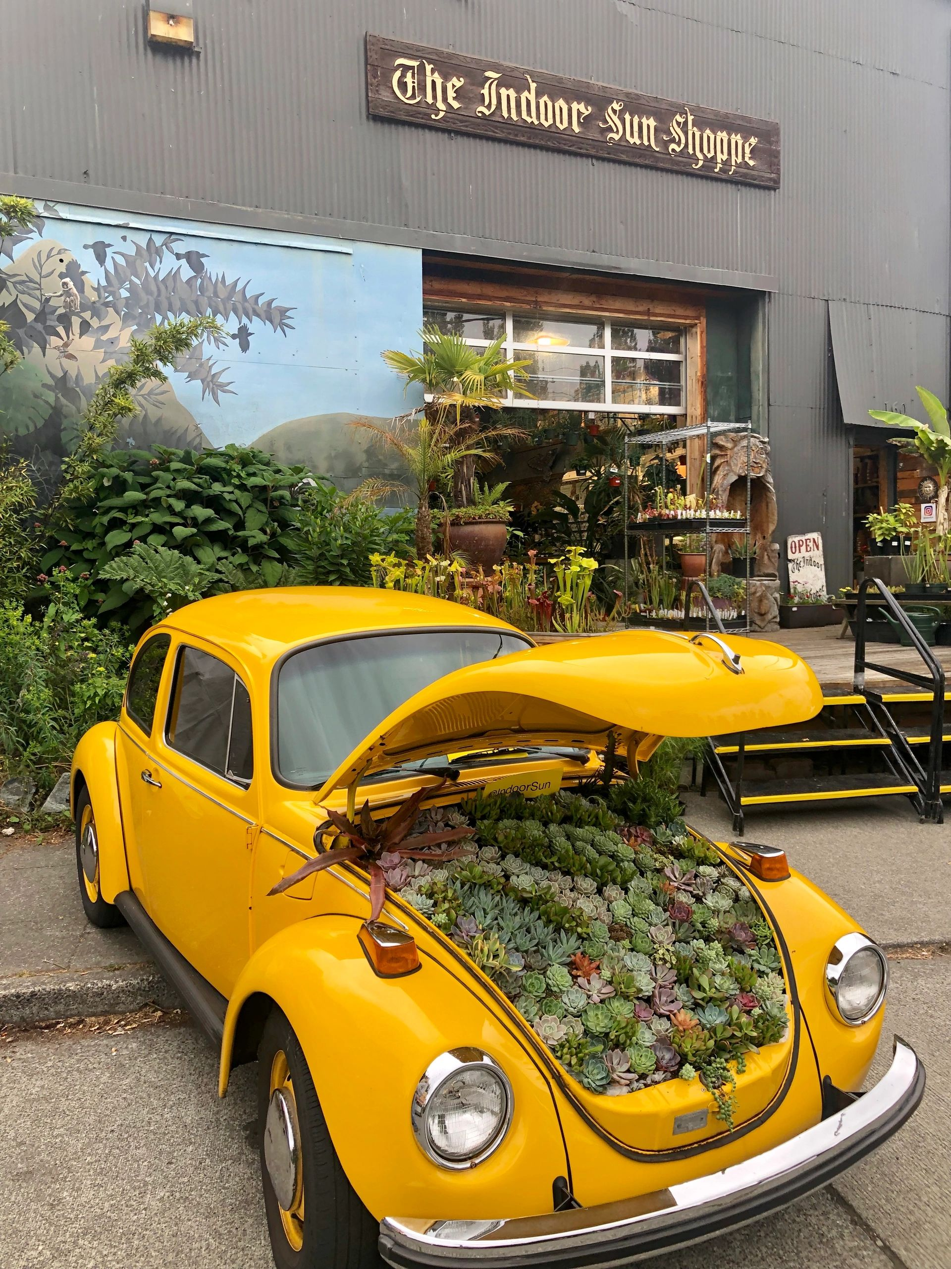The store front, a deck of carnivorous plants, & a Volkswagen beetle with succulents in the hood.