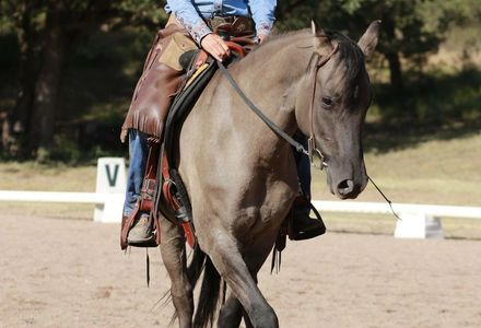 Preacher executing a turn on the haunches for Cowboy Dressage