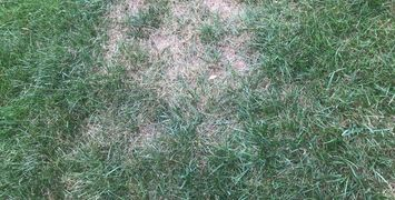 Fungus Lawn Disease Brown Patch Waxhaw NC Mint Hill NC