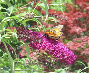 Bliss energy awareness freedom - image of butterfly on flower.