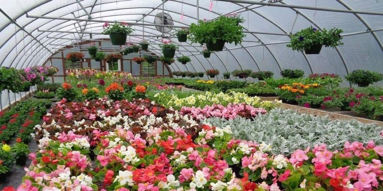 Greenhouse with flowering plants