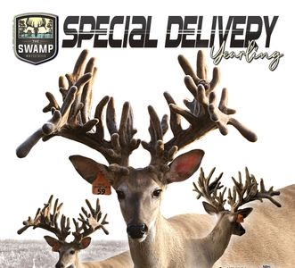 Special Delivery Breeder Buck at The Swamp Whitetails