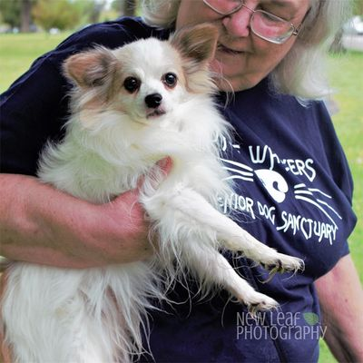 Volunteer holding a small dog at the White Whiskers Senior Dog Sanctuary in WNY.