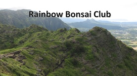 Rainbow Bonsai Club