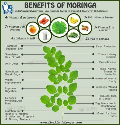 "Moringa, the miracle tree. Available in 4"" pots, 6"" pots, 1 gallon pots"