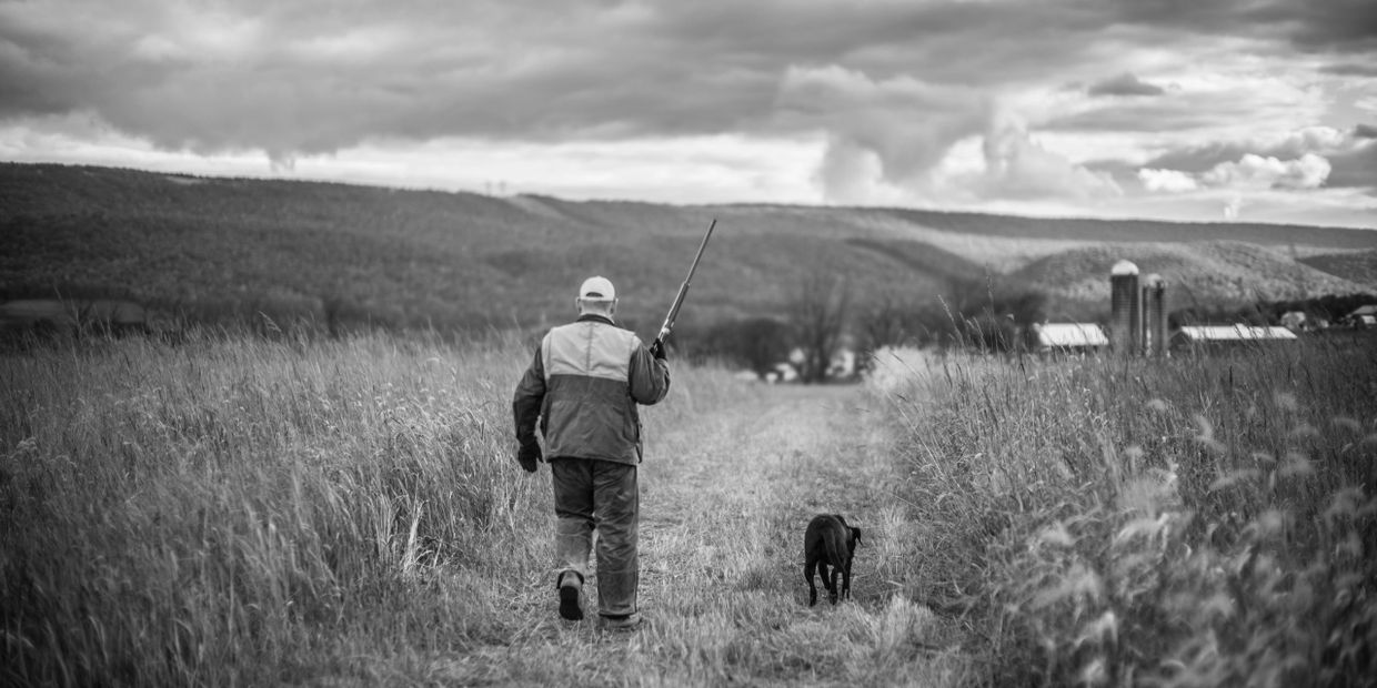 Pheasant hunting Orvis Endorsed Pennsylvania