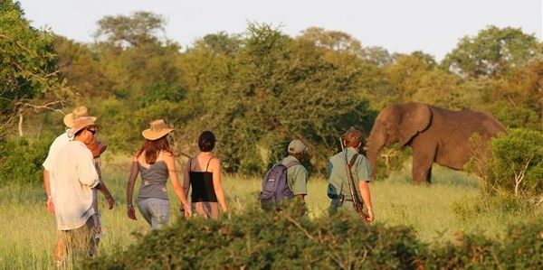 Elephant on a walking safari in Kruger National Park, South Africa