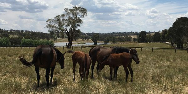 Mares and Foals at Twin Hills Stud