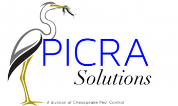 Picra Solutions