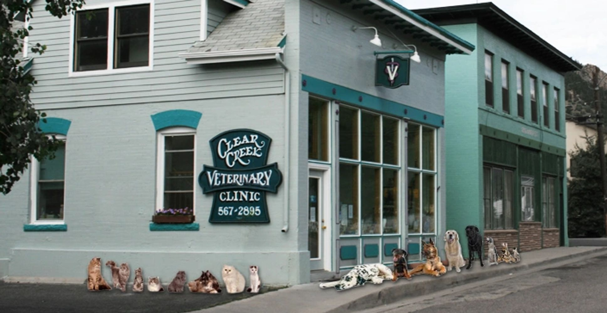 Photo of pets lined up outside Clear Creek Veterinary Clinic in Idaho Springs Colorado