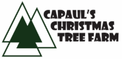 Welcome to CaPaul's Christmas Tree Farm