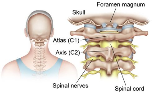 Upper Cervical Chiropractor in Tampa