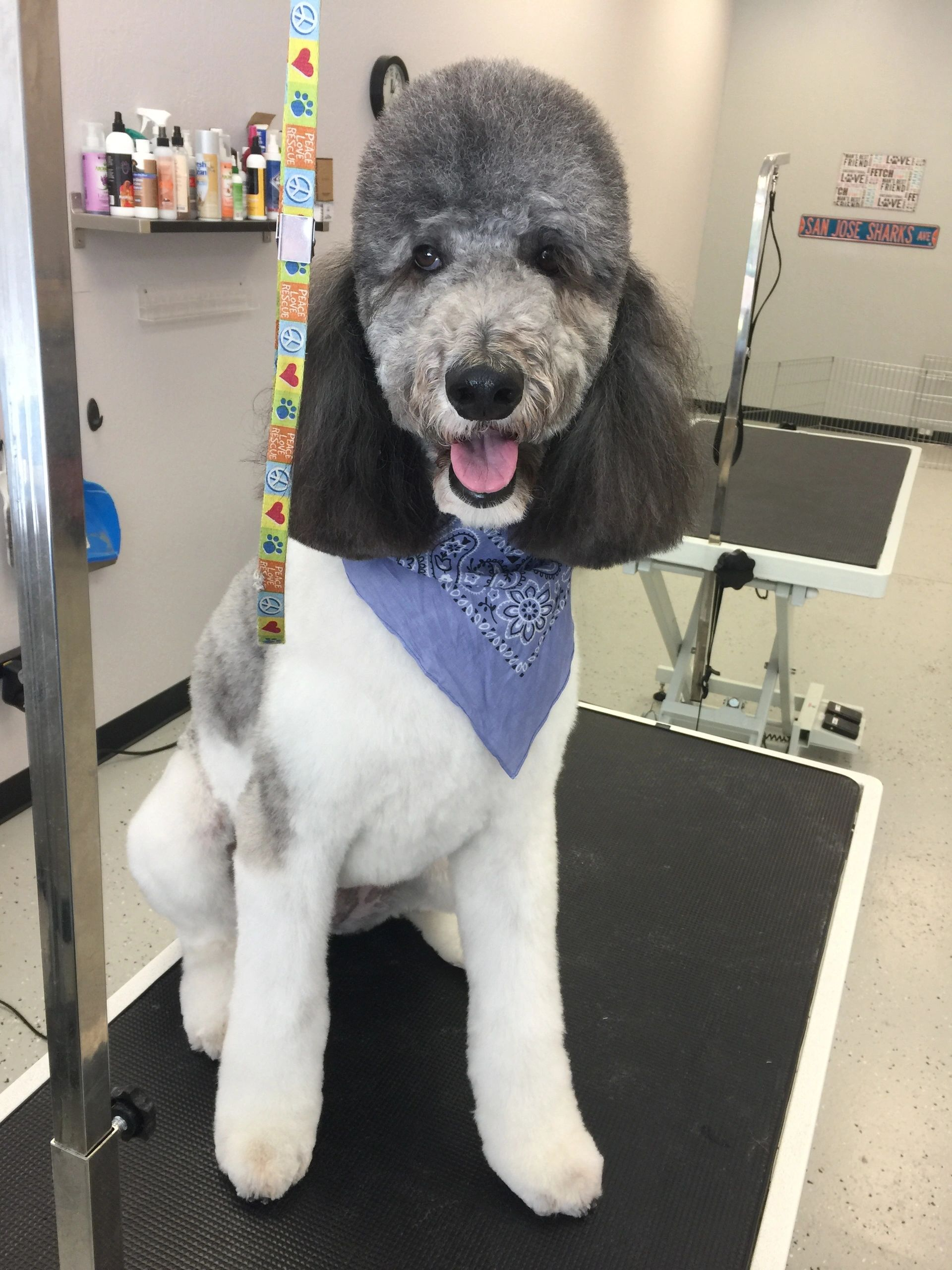 Mans best friend dog grooming solutioingenieria Image collections