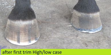 High / low hoof syndrome