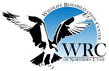 Wildlife Rehabilitation Center of Northern Utah