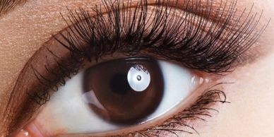EYELASH EXTENSIONS IN YORKVILLE PETALS YORKVILLE BEAUTY BROW AND LASH BAR