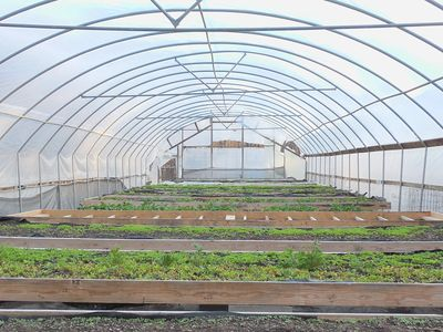 Picture of greenhouse with rows of crops.