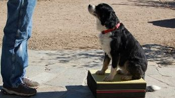 Using platforms to train your dog