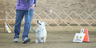 Linda and Winston compete in Rally Obedience