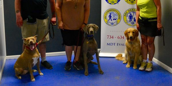 AKC Community Canine (CGCA) Sit/Stay in a small group skill.