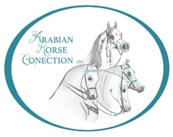 Arabian Horse Connection