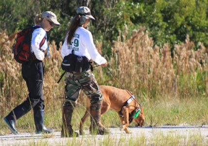 It takes a lot of time to train Search and Rescue (SAR) K9s to be ready for any mission.