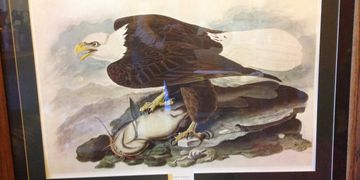 John James Audubon Eagle & Fish