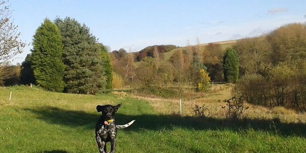 Pet dog training workshops Tadcaster Yorkshire