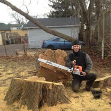 Tree removal being performed in Halton Hills