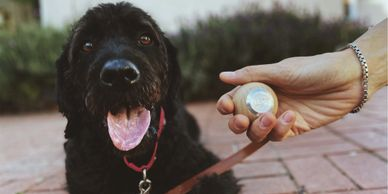 Laddyleash for a comfortable dog walk for both you and your doodle!
