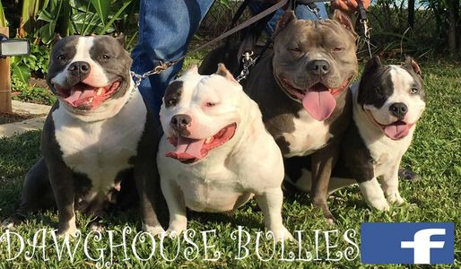 Dawghouse Bullies About Us