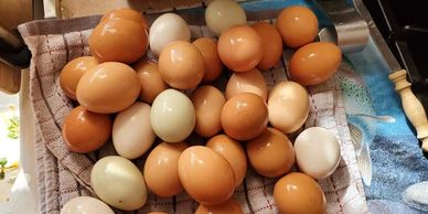 Fresh eggs from the chicken factory