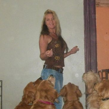 Stacy Fleming www.goldendoodlesny.com Golden Retrieverss & GoldenDoodles in NY
