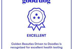 https://www.gooddog.com/breeders/golden-beauties-driven-to-doodles-new-york