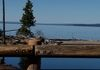 YELLOWSTONE LAKE- LOOK CLOSE, GRIZZLY JUST ABOVE THE POST