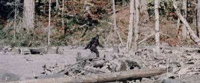 Frame 352 of the The Patterson–Gimlin film
