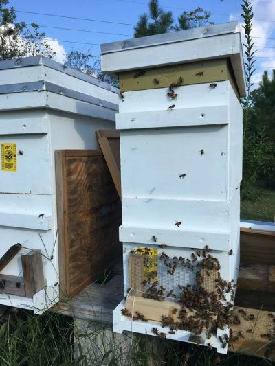 5x5 nucleus hive with robber screen and feeder.