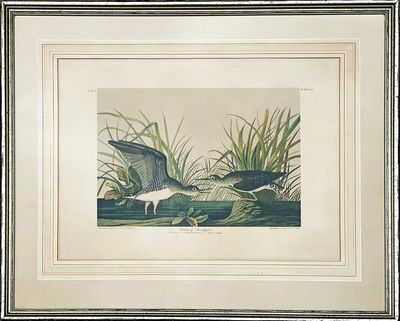 Solitary Sandpiper  by John James Audubon