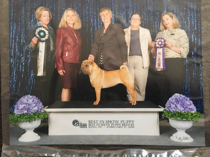 Martini's Only in Gold takes Best in Show at 7 months old at IABCA shows twice in one weekend!