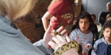 A woman holds a snake to the amazement of young kids.