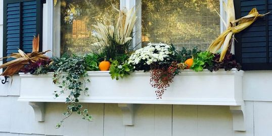 Window Box Ideas, Photos, and Articles