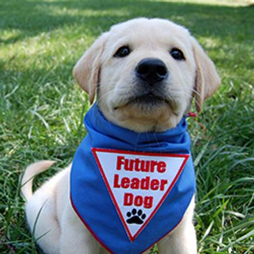 Leader Dogs for the Blind website and logo