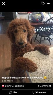 Poodle Pups In Pa